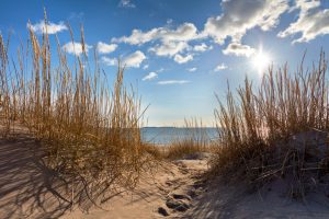 View from dunes through dune grass to the sea with the sun in background