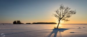 Sunset over a frozen lake with the sun behind a tree in foreground