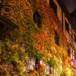 Colorful ivy on a wall at night
