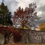 Trees above a wall