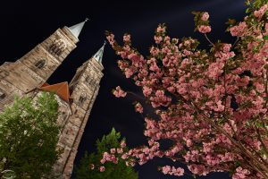 A pink blossom tree with a church in the background at night