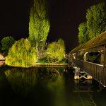 A big tree at lake at night