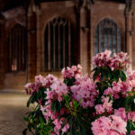 Flowers in front of the Lorenzkirche