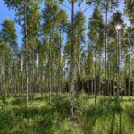 National park Isosuo and Purijärvi