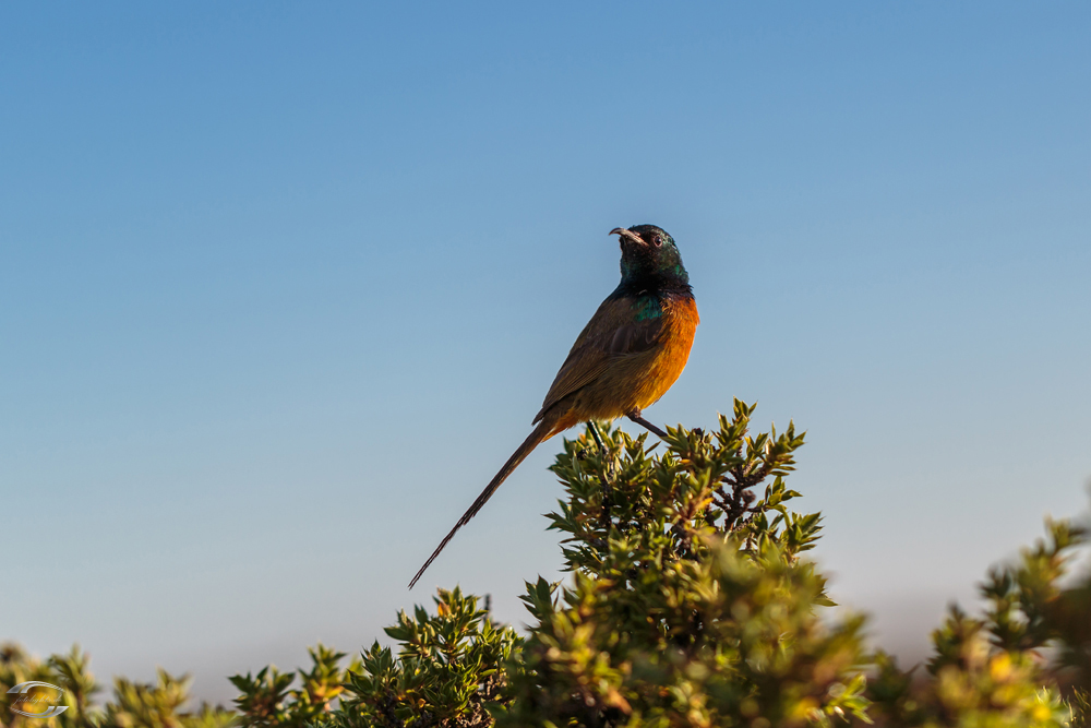 Bird on Table Mountain