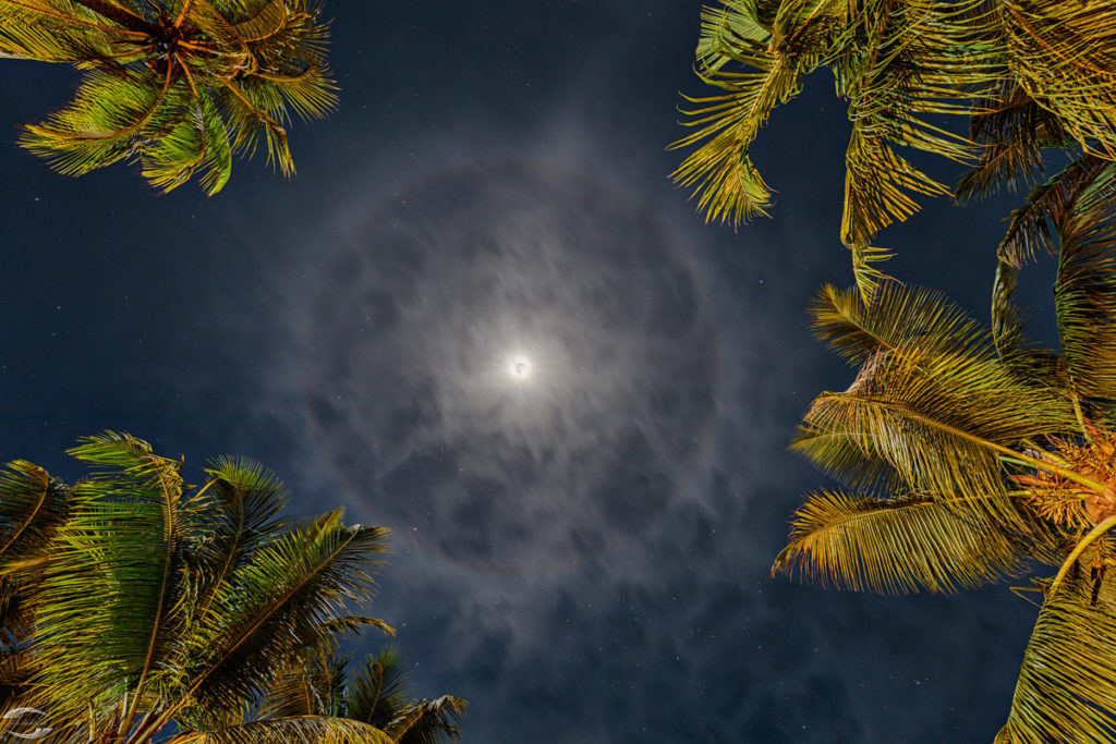Moon surrounded by palm trees